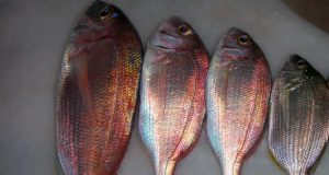 deniz balıkları