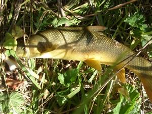 tatlı suda balık avı