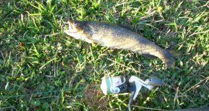 neden balıkçılık