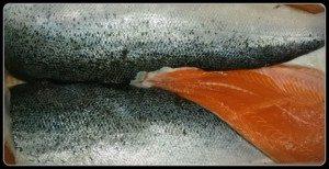 Balıkta-Yenebilir-Et-Oranı-1-300x197 Balıkta Yenebilir Et Oranı