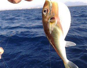 Yarım-Balık-300x225 Balon Balığı/Fugu