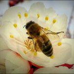 Böcek Sokmaları ve Alerjik Reaksiyonlar