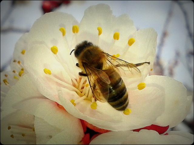 böcek sokması ve alerjik reaksiyon