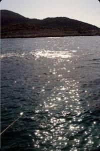 sokar-balığı-avı-2-300x200 Sokar Balığı Avı