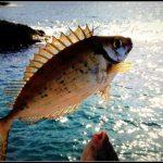 sokar balığı avı