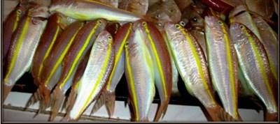 barbunla-tekir-farkı-4 Barbun Balığıyla  Tekirin Farkı Nedir?