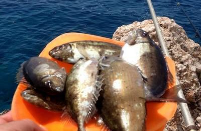 sokar-baligi-2 Sokar Balığı Avı Nasıl Yapılır?