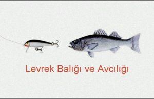 akya-640x350 Anasayfa