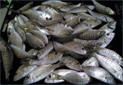kıyı Kıyıdan Balık Avında Bereketli Günler