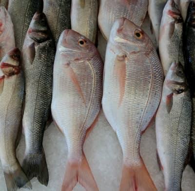 mercan Balık Tezgahları Şenlendi