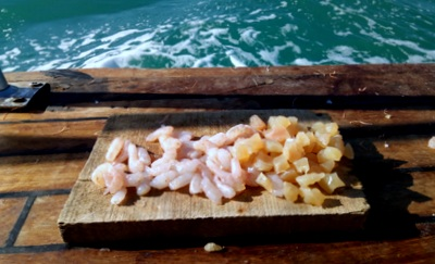 yemler Mercan Avı İçin Karides mi? Tavuk Göğsü mü?