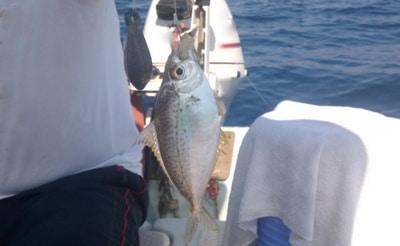 eksibalik1-1 Akdeniz'de Bir Kızıldeniz'li Balık Daha: Ekşi Balığı