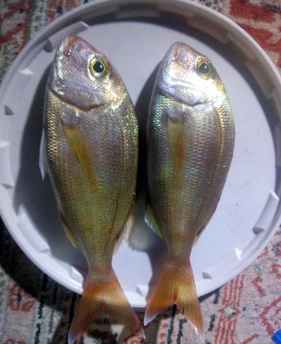 side-gece-balık-avı Side'de Gece Balık Avı