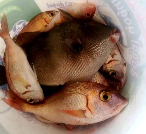 manavgatblk Yasak Sonrası Balık Avı